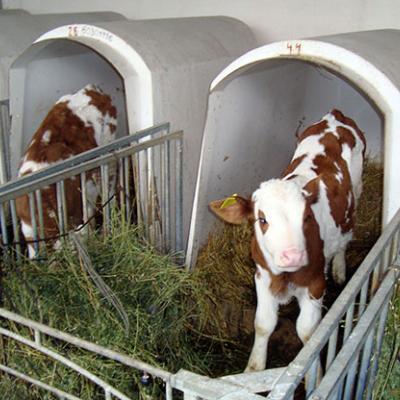 Индивидуальные домики для телят